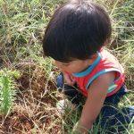 No RS, indígenas plantam quatro mil mudas de araucária em terra com demarcação paralisada há 14 anos